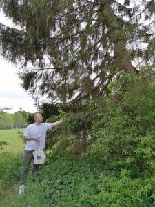 Vincent Domeier bei der Maiwipfel ernte